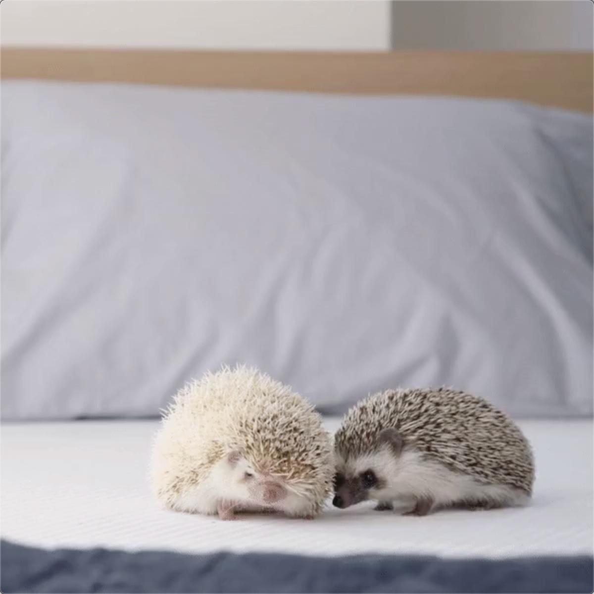 Baby Animals Comfort GIF