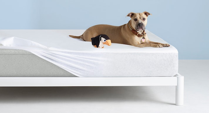 Dog on Casper Mattress Protector