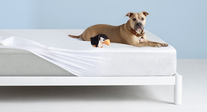 Dog on Casper Mattress Protector