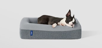 A dog sleeping in a Casper dog bed