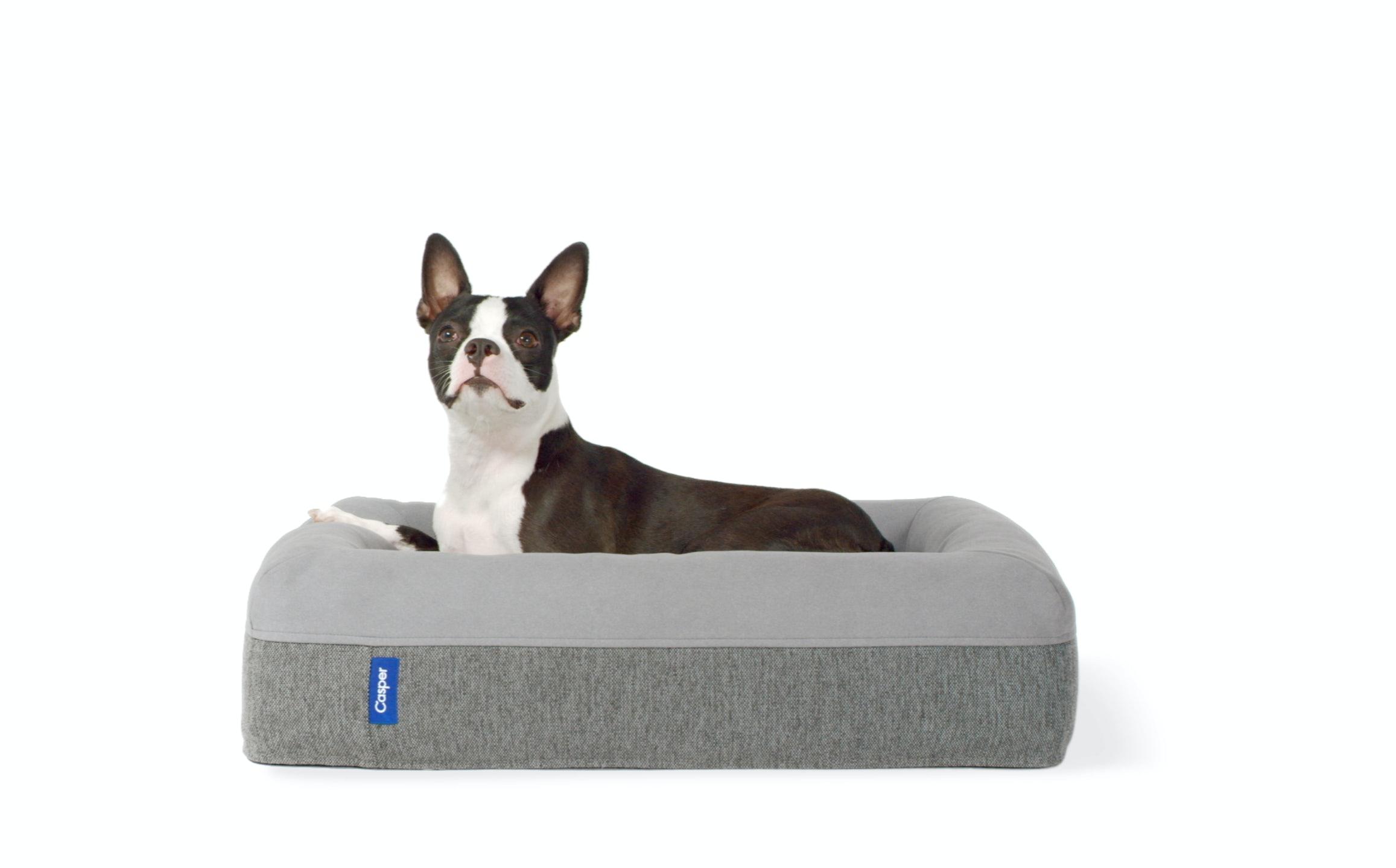 Dog bed awake