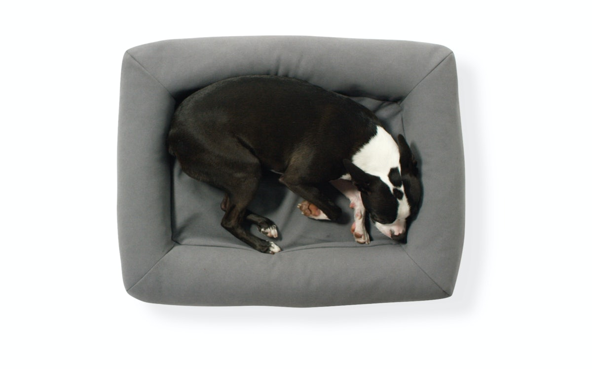 Dog bed asleep