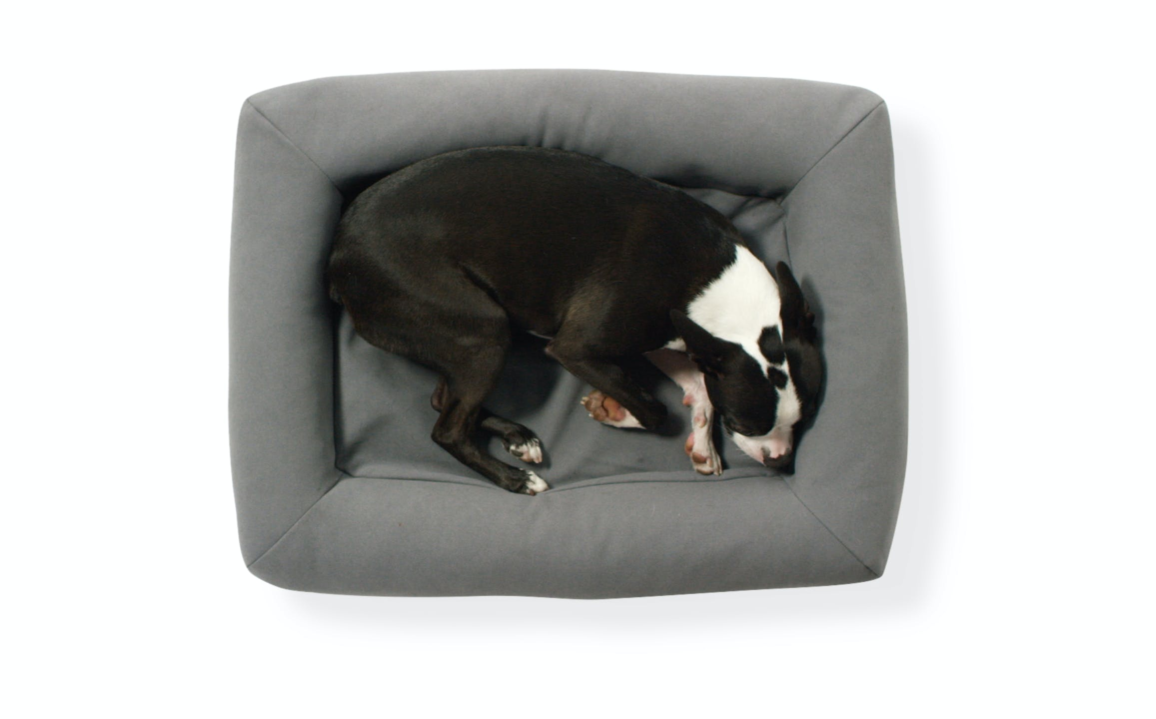 dog bed small medium or large casper