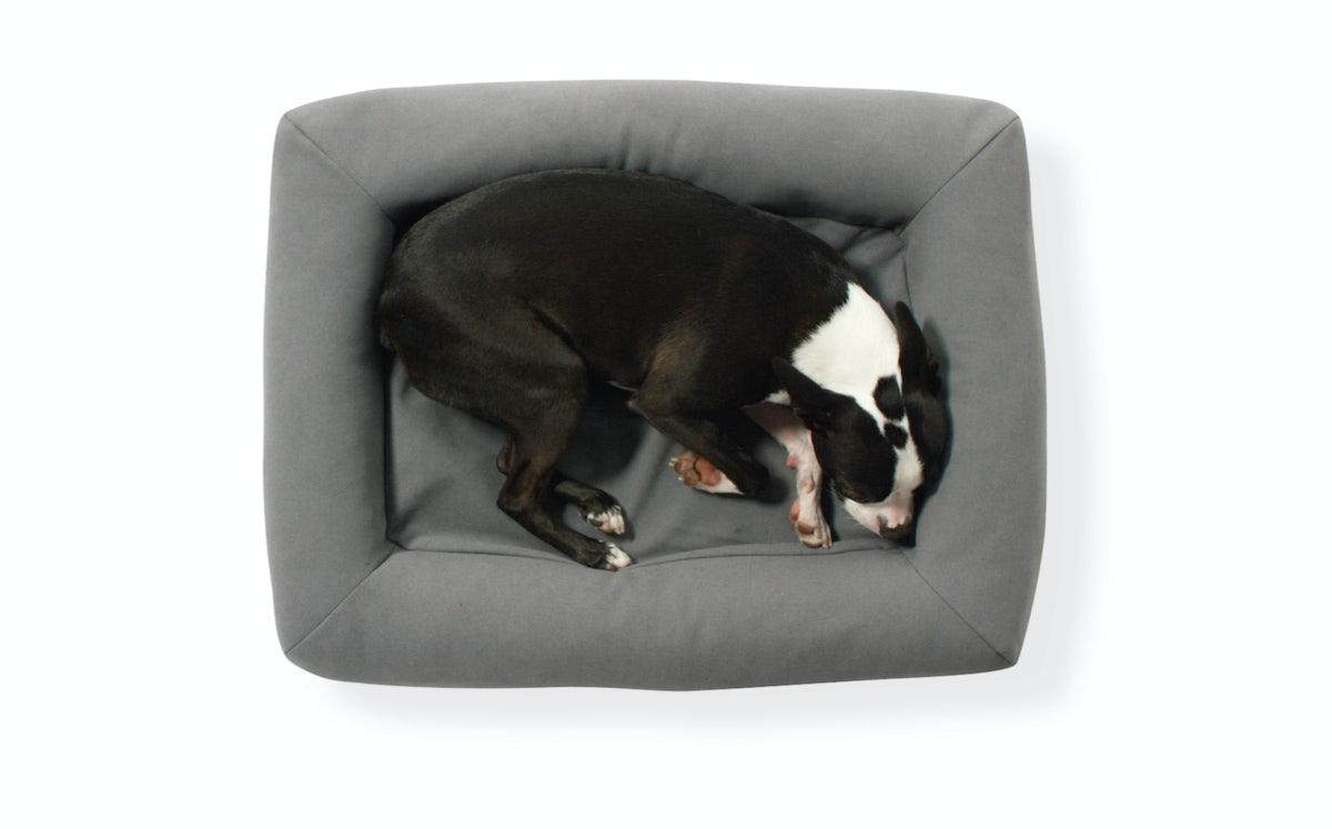 Take shelter Dog bed asleep